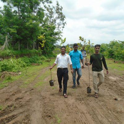 Tree Plantation at Kalamba